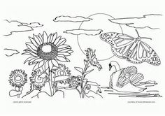 Nature Coloring Pages - Bing images