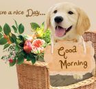 Good morning greetings with cute teddy bears and puppies Latest Good Morning, Good Morning Images Hd, Good Morning Picture, Morning Pictures, Good Morning Dog, Good Morning Greetings, Good Morning Wishes, Night Quotes, Morning Quotes