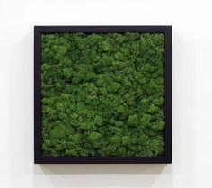 moss green + black frame