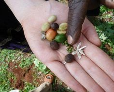 The journey of coffee in one photo... From flower, through fruit, to grower, roaster, bar and cup.