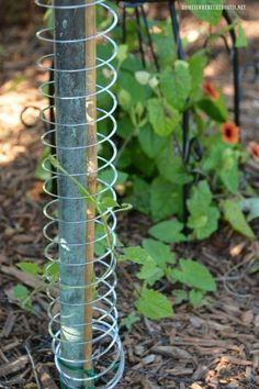 Flower garden Beds - Slinky Garden Hack and Trellis for Climbing Vine Garden Tools, Diy Garden, Deck Garden, Climbing Vines, Garden Vines, Garden Landscaping, Garden Hacks Diy, Gardening Tips, Home Vegetable Garden