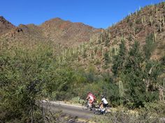 Sojourn cyclists riding in Saguaro National Park
