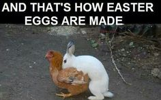 Easter eggs...haha!!!!