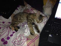 Sleep :)