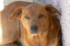 Dog Rescue in Andalusia