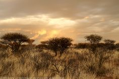 Sundown Namibia. BelAfrique your personal travel planner - www.BelAfrique.com Dawn And Dusk, Black Jewel, How To Speak French, Travel Companies, Travel Planner, Rest Of The World, Travel Stuff, Sunrises, Milky Way