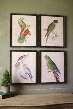 "Set of 4 Framed Assorted tropical birds wall art.  Framed in distressed black wood and set on antiqued journal printed pages, these birds will add tropical color and flavor to your walls. Group them together or hang separately.... Each print is approximately 16"" wide by 20"" tall. Tropical Birds Art by Cambridge Home IDEAs. Home & Gifts - Home Decor - Wall Art Orlando, Florida"