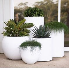 It's on, this weekend. The massive pot & plant warehouse sale! The Balcony Garden + have partnered… White Planters, Planter Pots, Large Outdoor Planters, Modern Planters, Planters Around Pool, Balcony Garden, Garden Pots, Hanging Plants, Indoor Plants