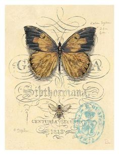 Art Print: Honeybee Papillon by Chad Barrett : Butterfly Images, Vintage Butterfly, Butterfly Art, Chad Barrett, Collages D'images, Etiquette Vintage, Foto Transfer, Transfer Paper, Images Vintage