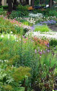 Five Steps to Great Perennial Flower Garden Design garden stuff