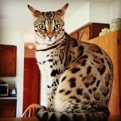 Lori's Cat