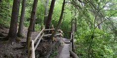 6 Pocono Hiking Trails to Experience Fall Colors Pocono Mountains, Hiking Trails, Pennsylvania, Fall, Colors, Plants, Autumn, Fall Season, Colour