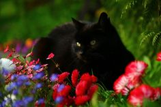 Black Cat hd wallpaper by lise Black Cat Wallpaper, Hd Wallpaper, Black Cat Aesthetic, Cat Run, Raining Cats And Dogs, Cat Sleeping, Beautiful Cats, Cats And Kittens, Photo Art