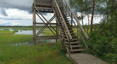 Mulkkujärven lintutorni, Alavus. Ladder, Stairway, Ladders