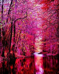 everyday a different color, beautiful gifs, soft goth, nature. images that I like and attract my attention. I hope you'll find images here for your taste too. All Nature, Amazing Nature, Pink Nature, Beautiful World, Beautiful Images, Beautiful Wallpaper, Beautiful Dream, Simply Beautiful, Pink Forest