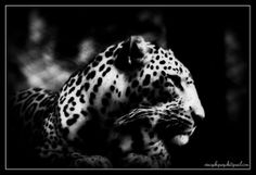 The Stalk of Death #GrabYourDream #Adventure #Travel #Contest #Wild
