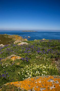 Saltee Islands, County Wexford // Ireland's biggest bird sanctuary. Wexford Ireland, Irish Landscape, England And Scotland, Emerald Isle, To Infinity And Beyond, Ireland Travel, British Isles, Northern Ireland, Dream Vacations