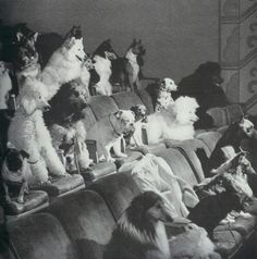 Obedience class -1958 - Vintage National Geographic Scans/my dogs need that.how DID they get them all to sit there together like that?,Amazing!