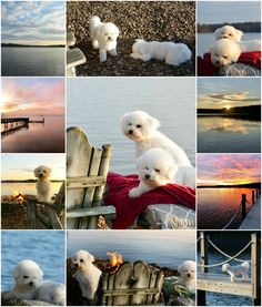 Here's a little weekend waterview from Lake Norman. I took these first three photo… Bichon Frise, Deck The Halls, Dog Walking, Happy Sunday, Sailboat, The Past, December, Christmas Decorations, Norman