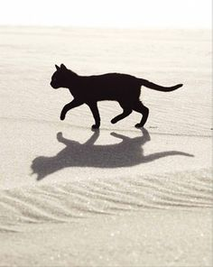Elegant black cat...reminds me of one I had that was a real lady...lived to be 22 years old :O)