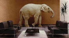 """""""O Grito do Bicho"""": O que aconteceria se os animais tivessem a intelig..."""