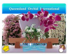 Magnificent Orchids in Perspective 🔎❀🔍 Monumental Architecture, Growing Orchids, Perennials, Perspective, Plants, Planters, Plant