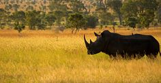 African Ecology & Conservation in South Africa