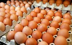How to start a profitable chicken egg production business and the poultry egg farming business plan (PDF, Word and Excel). Poultry Business, Business Plan Pdf, Business Names, Eggs For Sale, Juicing For Health, White Chicken, Chicken Eggs, Large Egg, Superfoods