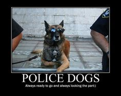 Its all about the dogs