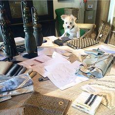 Taking care of business #HuckDay #HomeMarketHuck #design #interiordesign #dogsofTHM