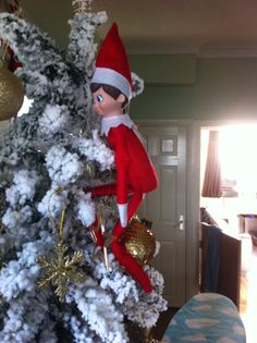 Bobby was scaling our Christmas tree this morning!