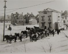 """Moving a house with horses in Winnipeg, Canada in Photo by Lewis Benjamin Foote. Hit """"Share"""" to pass on the history from --> Old Photo Archive Colorful Pictures, Vintage Pictures, Old Pictures, Old Photos, Horse Pictures, Canadian History, American History, Old West, The Good Old Days"""