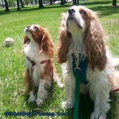Dog Training With Tonya: Teaching Good Walking Skills