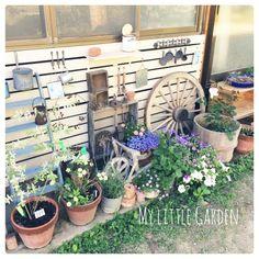 セリア/プレゼント企画計画中♥/ロハス/DIY/玄関ガーデン/鉢植え…などのインテリア実例 - 2015-06-06 05:44:00   RoomClip(ルームクリップ)