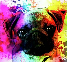 Pug Acrylic Print featuring the painting Giant Pug Watercolor Print by Robert R Splashy Art Abstract Paintings Dog Paintings, Abstract Paintings, Abstract Art, Pug Art, Painting Wallpaper, Dog Portraits, Illustrations, Watercolor Print, Origami Tattoo