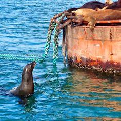 Sea Lions in Guerrero Negro, Baja California Sur, Mexico