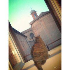 Dalla mia finestra la mia Susy osserva la chiesa e chiostro di San Paolo. #MyFerrara #comunediFerrara #igersferrara #Ferrara