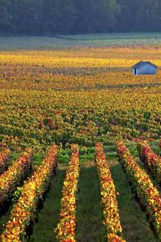 9 wine harvests worth traveling for.