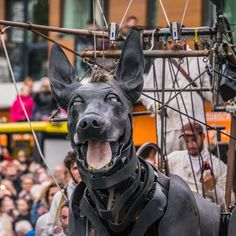 XOLO 2 - Xolo is awake! I went to see the Royal de luxe giant puppets in Liverpool and I was amazed by their sheer size, ingenuity and beauty! This is Xolo the dog, at the restart of the parade Gouda, Photography Portfolio, Puppets, Liverpool, Dance, Dogs, Animals, Beauty, Animales