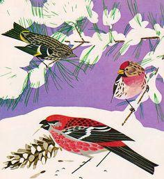 Introducing Our Eastern Birds by Matthew F. by ElwoodAndEloise
