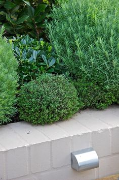 Lavander, Thyme, Pittosporum Miss Muffet & Bay Tree Back Gardens, Small Gardens, Outdoor Gardens, Coastal Gardens, Cheap Landscaping Ideas, Backyard Landscaping, Backyard Ideas, Landscape Design, Garden Design