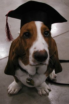 I graduated obedience school. Hope they don't expect miracles.