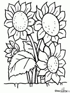 sunflowers color page nature food coloring pages coloring pages for kids thousands of free printable coloring pages for kids