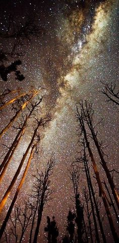Looking up at the Milky Way