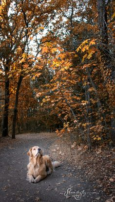 This golden is checking out things that make fall a fun time to be out in the woods. Cute Puppies, Cute Dogs, Dogs And Puppies, Doggies, Autumn Photography, Animal Photography, Fall Dog Photos, Animals Beautiful, Cute Animals