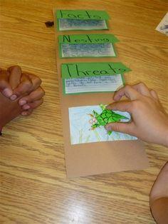 Grade Frolics: Sea Turtle Stuff/Project/Research/Fun - Science - Tierwelt 4th Grade Classroom, Science Classroom, Teaching Science, Science Activities, Science Projects, School Projects, School Ideas, Science Resources, Science Ideas
