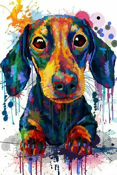 Dachshund I love my little boy Benjamin, he fills my life with happiness, and sometimes comedic relief. I love you Benji boy 3 Dachshund Art, Dachshund Puppies, Weenie Dogs, Daschund, Doggies, Dachshund Drawing, Funny Puppies, Dog Portraits, Animal Paintings
