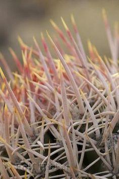 In the Desert Cactus Plants Information http://www.guzmansgreenhouse.com/desert-shrubs/desert-landscape.htm
