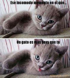 Gaticos ... #memes #chistes #chistesmalos #imagenesgraciosas #humor http://www.megamemeces.com/memeces/imagenes-de-humor-vs-videos-divertidos