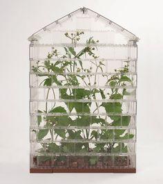 214 Best Plants Terrariums Images In 2015 Terraria
